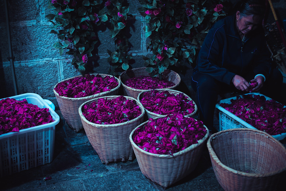 an old lady checking rose petals