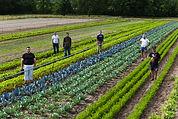 HVI-producteur-legumes.jpg