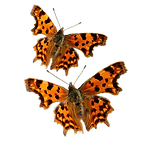 Vlinder_web_2_PNG.png