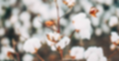 About_0004_EBH_RLC_Field_Gin_026.png