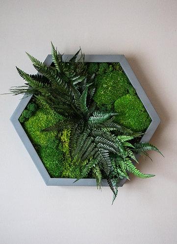 CODY-greenery
