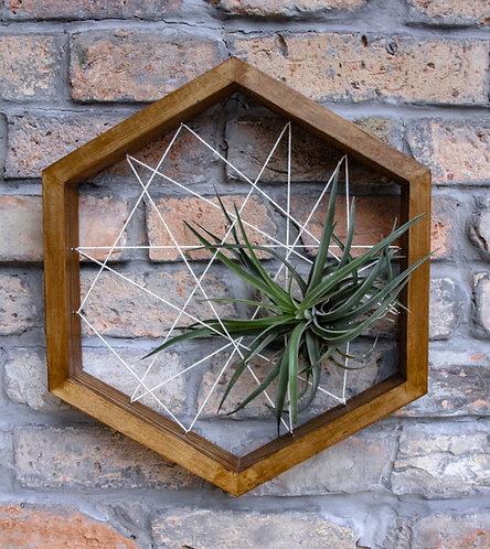 THEO-hexagon