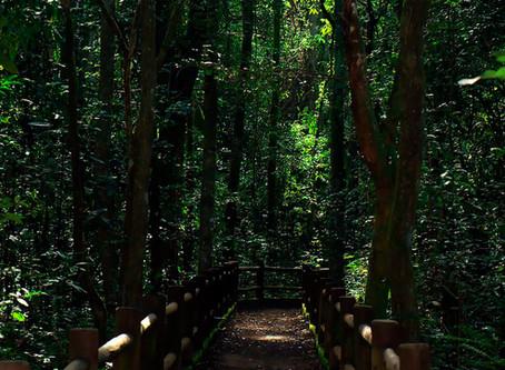 ICMBio autoriza reabertura do Parque Nacional de Brasília