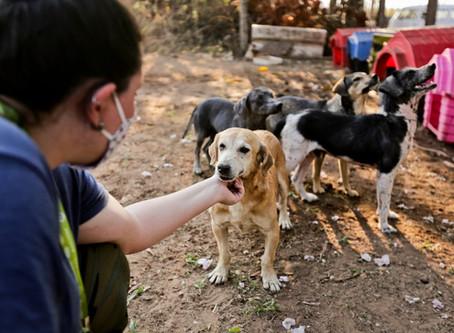 """Em tempos de isolamento, um """"cãopanheiro"""" é sempre bem vindo"""