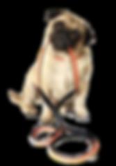 dogchainpug.png