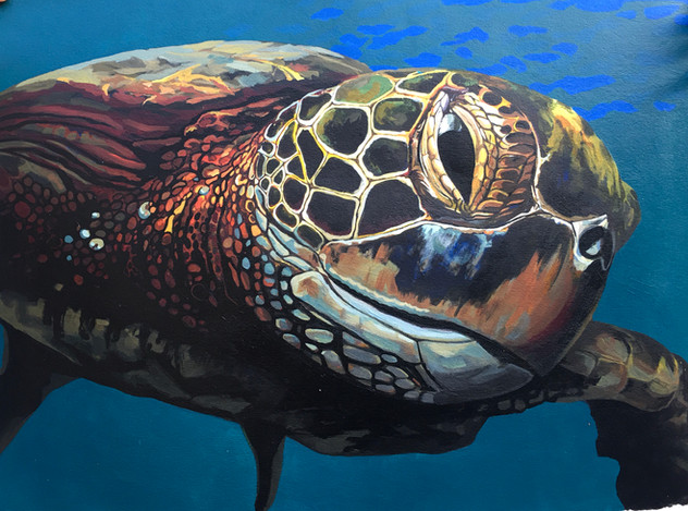 Approaching Turtle