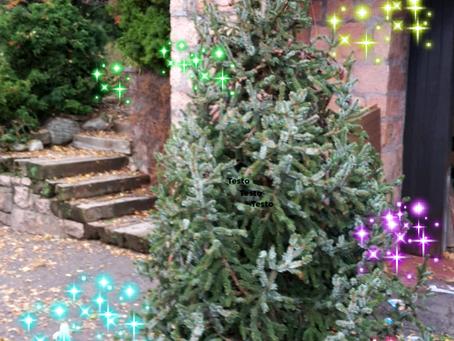 Asta benefica abete per Natale