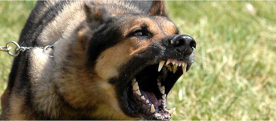 San Diego Dog Bite Attorney