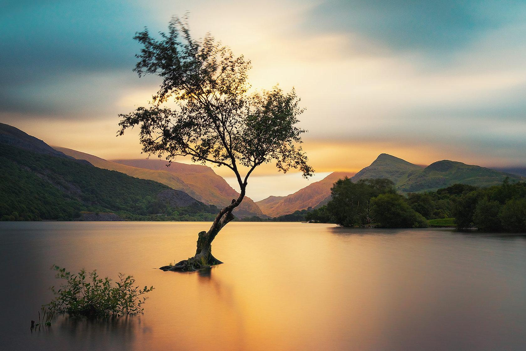 solitary-tree.jpg