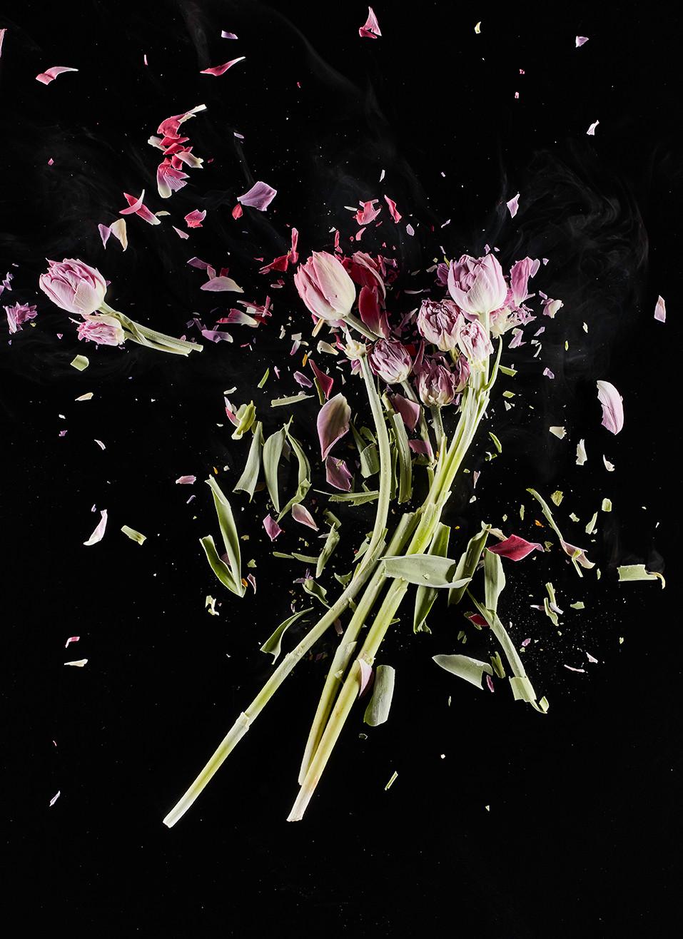 Daniele-Bozzano_CrioFlowers-Tulipaniviol