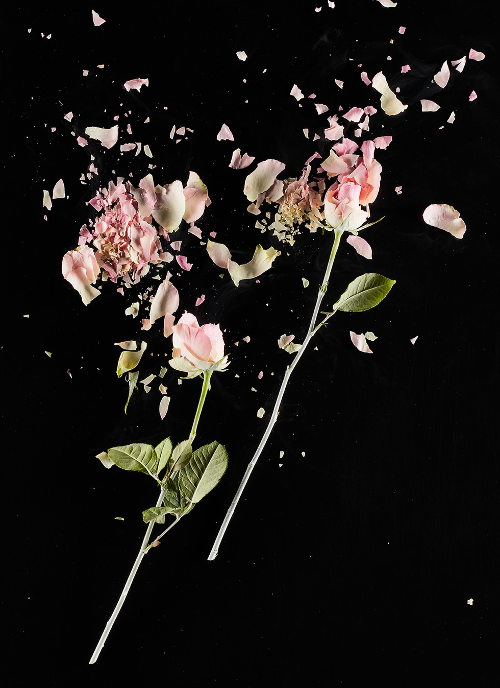 Daniele-Bozzano_CrioFlowers-Roserosa