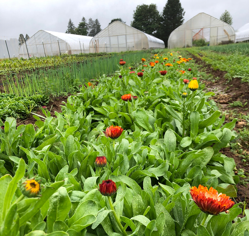 Love Letter Farm