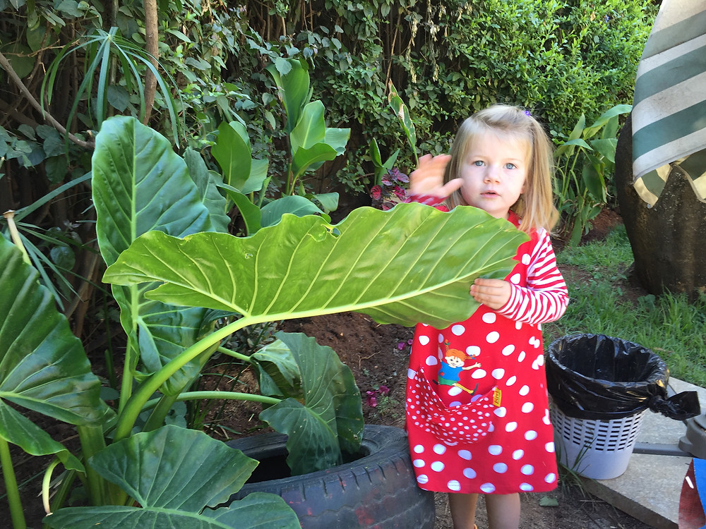 plant investigation