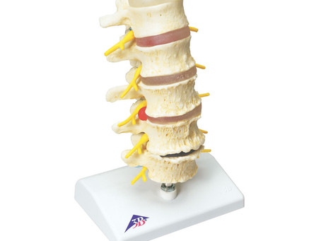 8 Things You Didn't Know About Your Spine