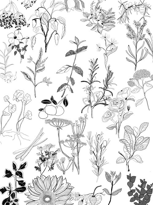 Botanical Print, Ingredients from collaboration with A Little Cup tea company