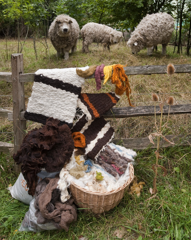 Wool products and sheep
