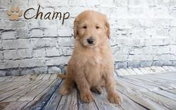 Champ1