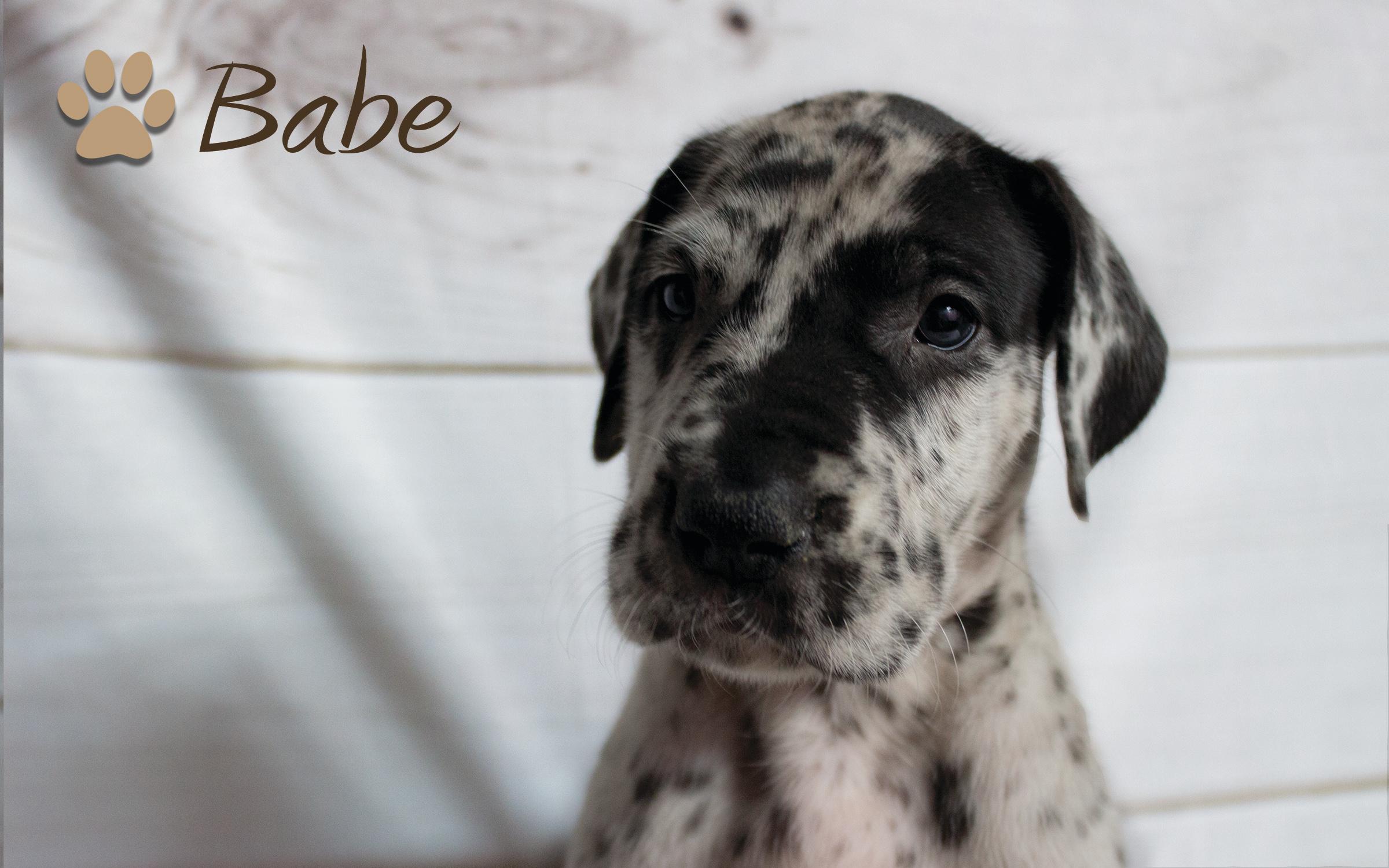 babe3