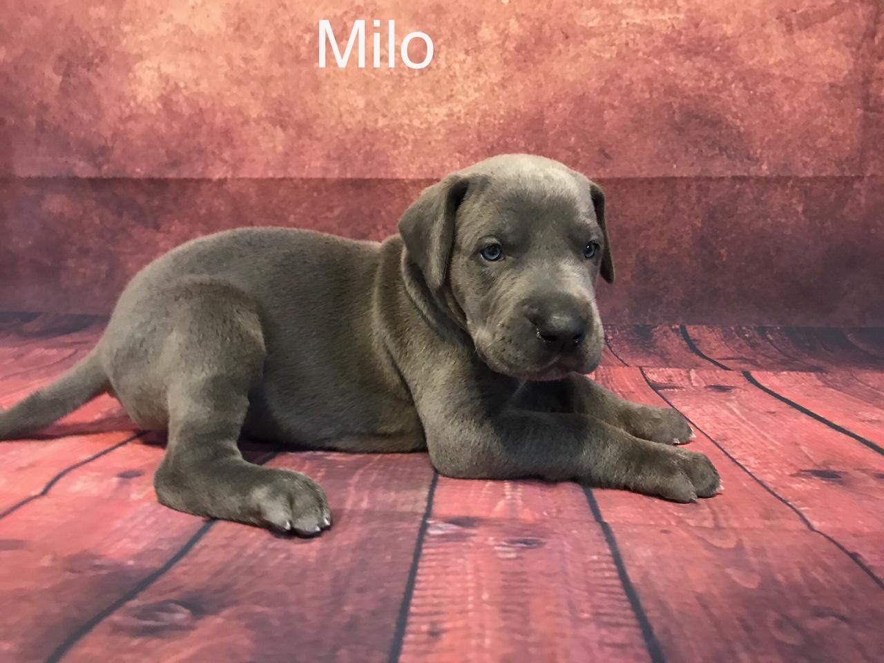 MILO4