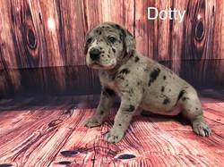 DOTY2