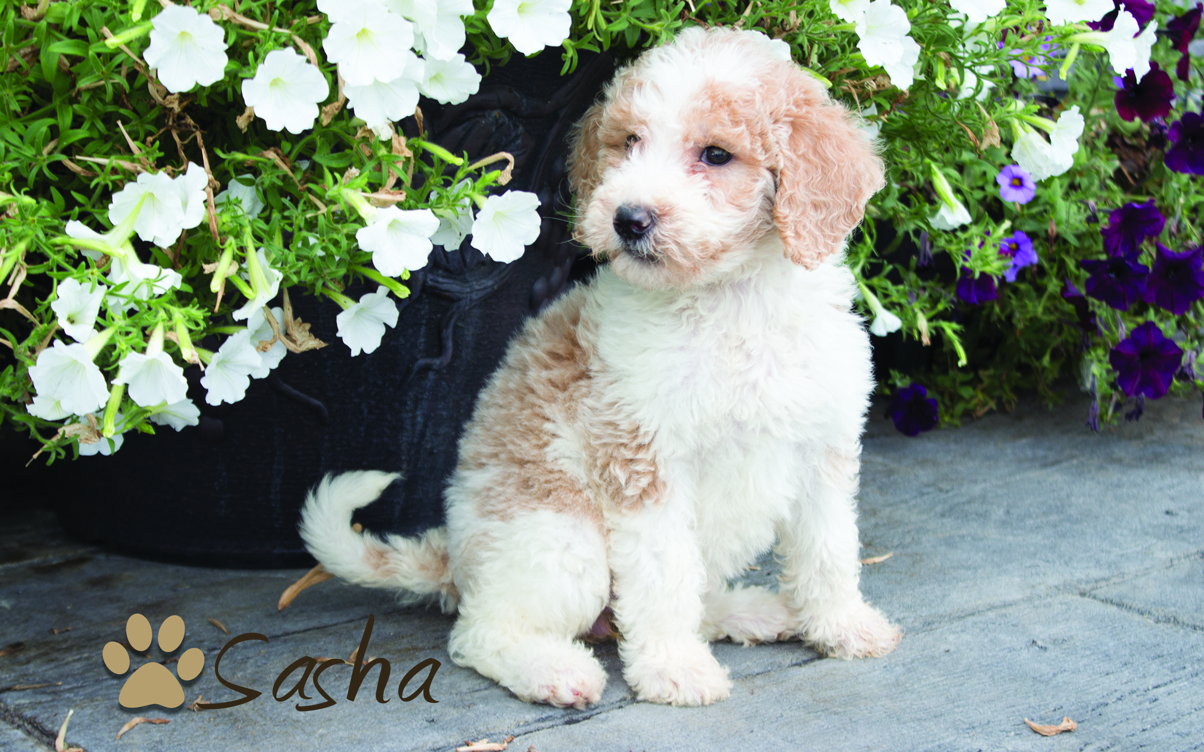 sasha4