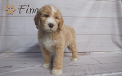 Finn6