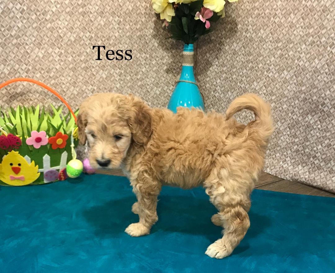 TESS1