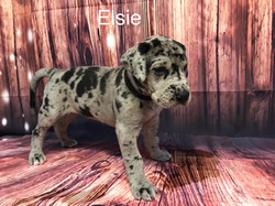 ELSIE4