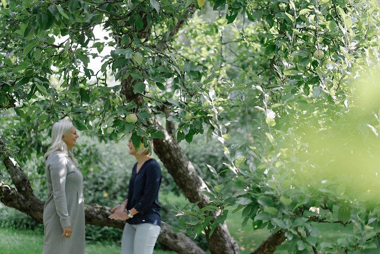 omenapuu(1).jpg