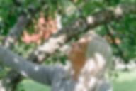marika puu(1).jpg