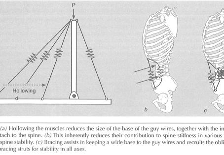 Core training e salute della schiena