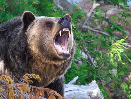 Allenamento della Settimana: Siberian Bear