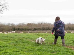 Council calls for dog owners to respect livestock in the countryside