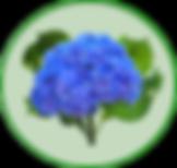 Logo Hortencia.png