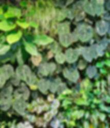 Detail Tropical.jpg