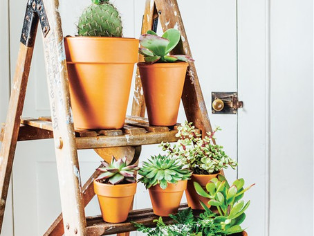 Why Indoor Plants Make You Feel Better.