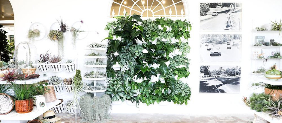 NEW! Living Wall Planters and the 10 Easiest Plants to Grow in one.