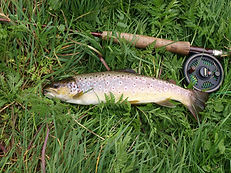 Trout and fishing rod