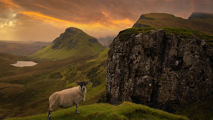 sheepfarming.jpg