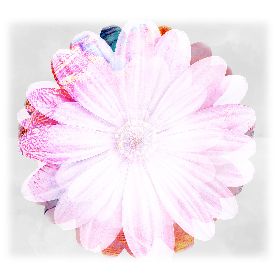 FLOWER 2 HIGH RES 40CM.jpg