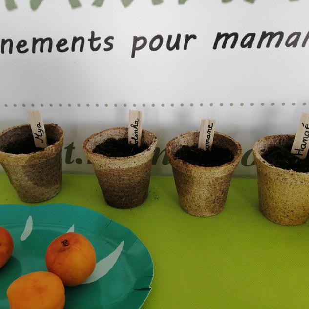atelier semi de capucines