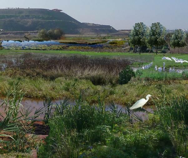 Biodiversity area