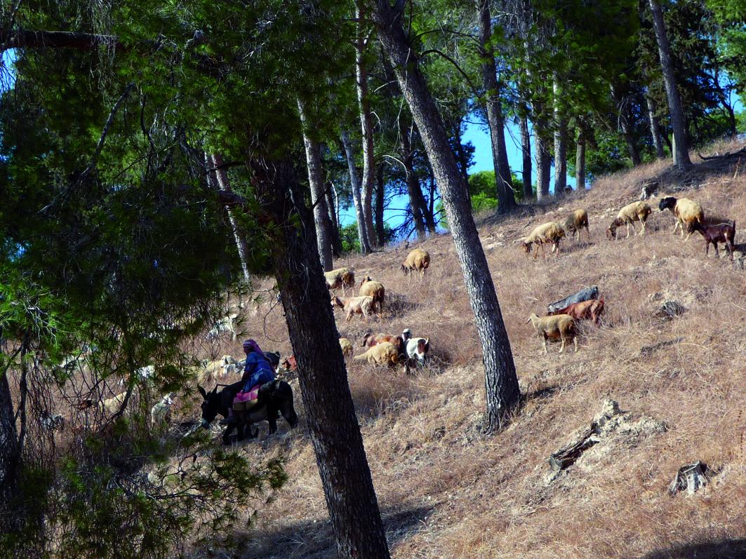 Balfour Community Forest