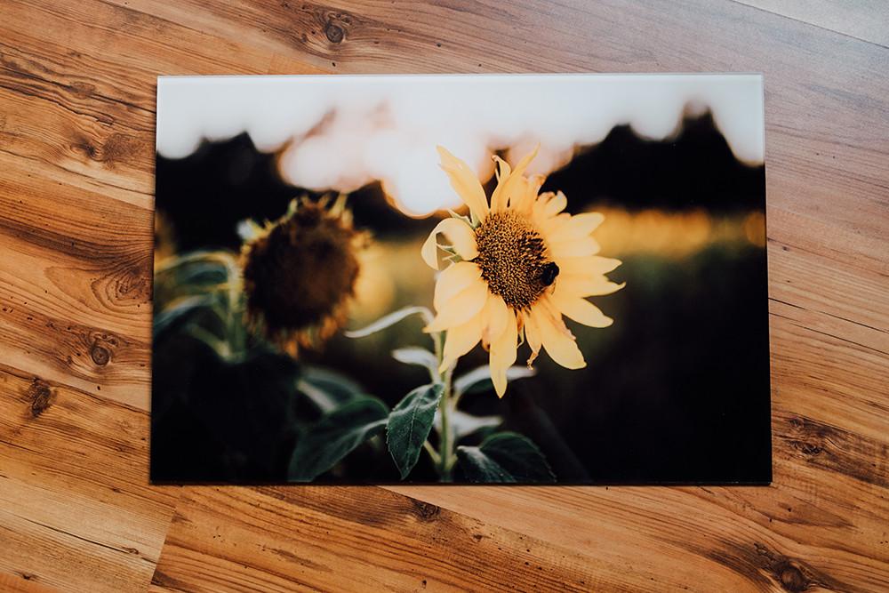 Sonnenblume mit biete