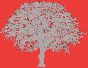 tree rd.jpg