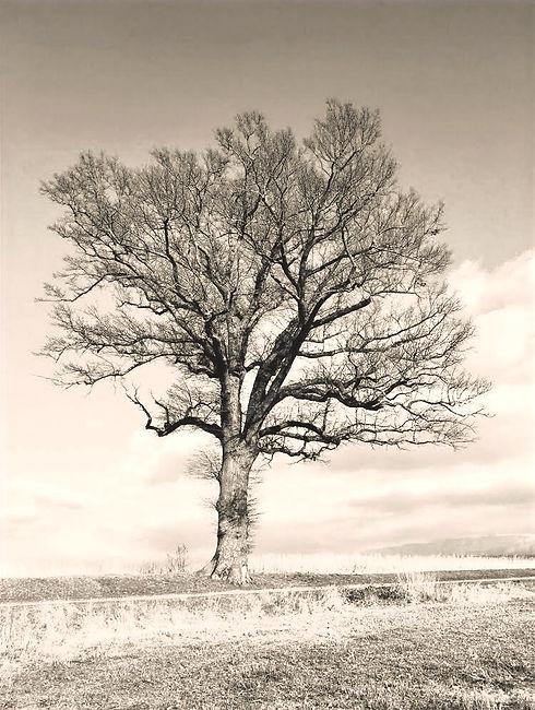arbre argenté_edited.jpg