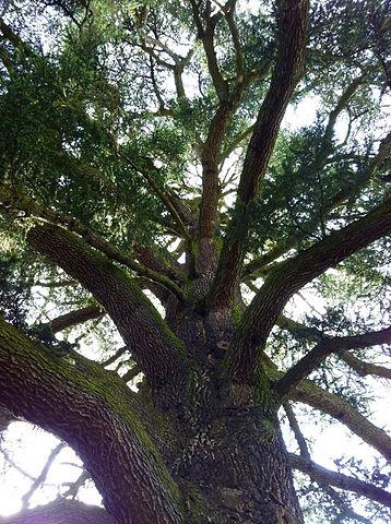 arbrevert.jpg