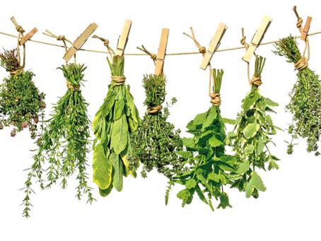 A cura pelas plantas
