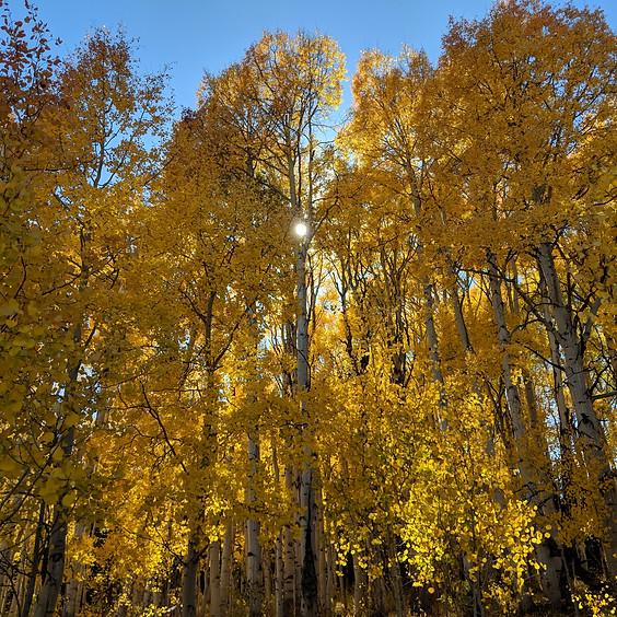 Autumn Meditation & Nature Immersion