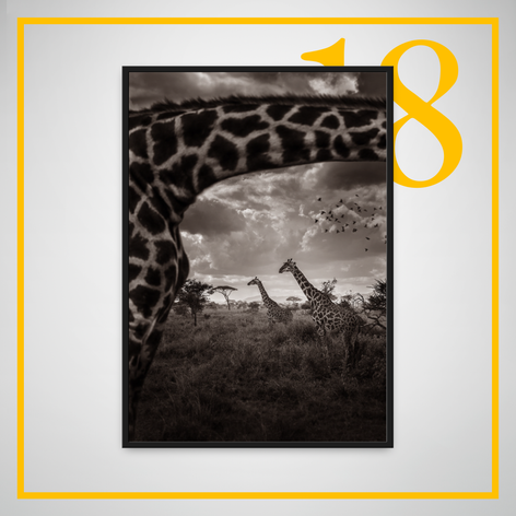 """Looking through the Giraffe"" - ERIC ISSELEE"